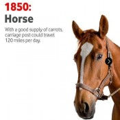 Hold your horses with Vodafone   Offer